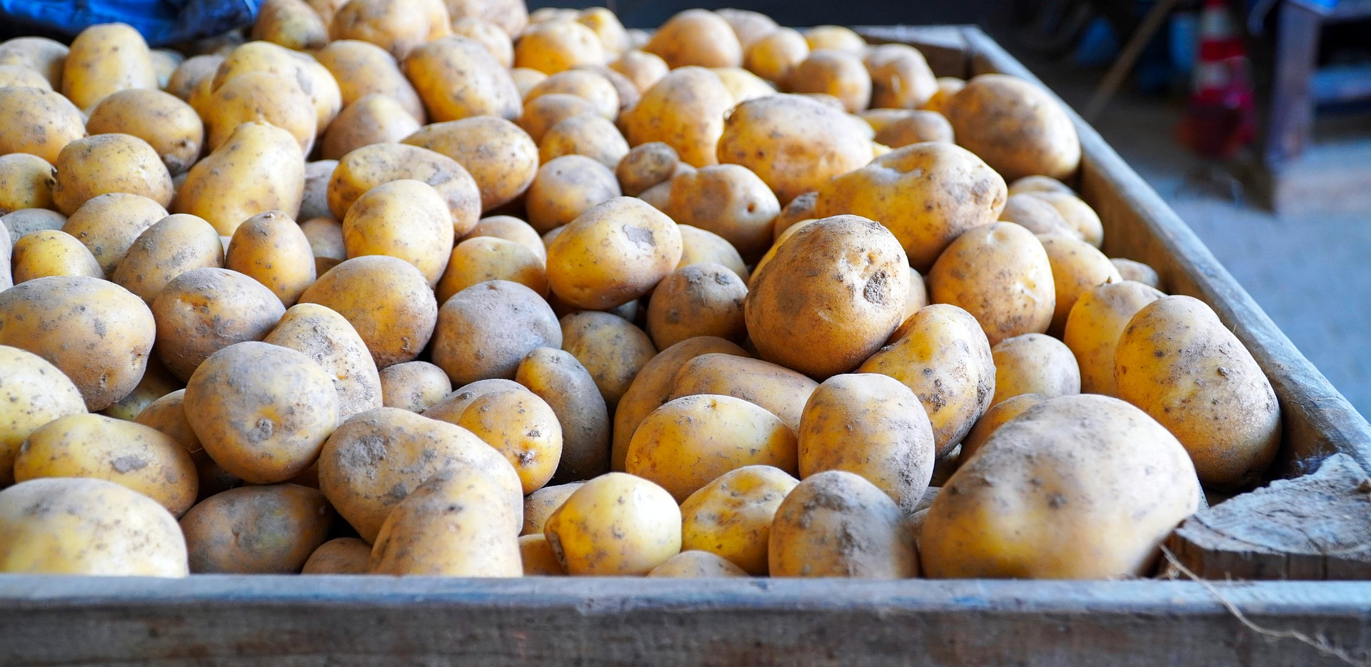 It's crunch time for SA potatoes as local farmers try to recover from lockdown lows