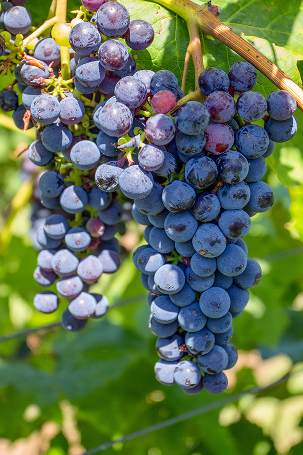 Upskill your palate with an online wine class